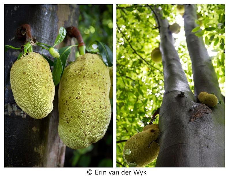 Zanzibar Jackfruit