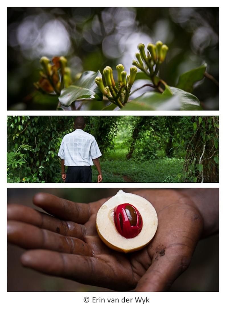 Zanzibar Spice Walk