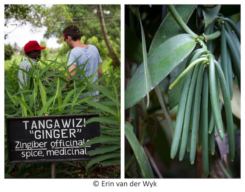 Zanzibar Spice