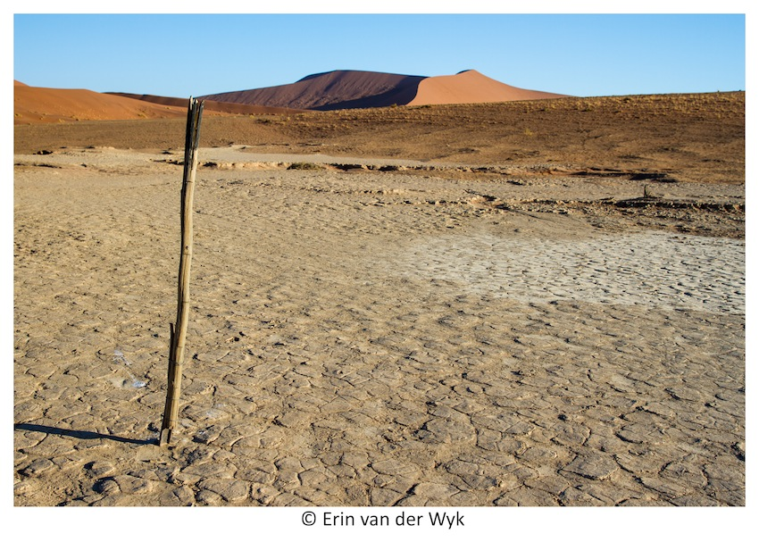 Posts marking the way to Hiddenvlei