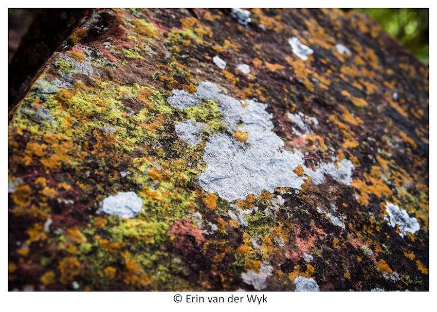 Waterberg 6
